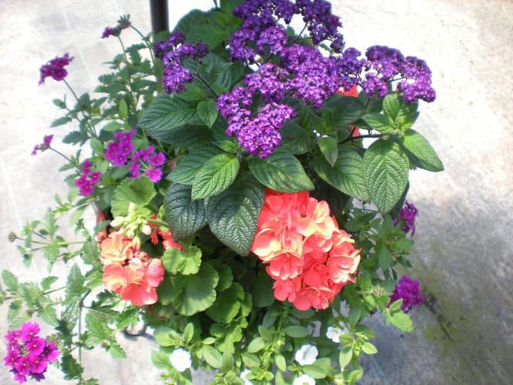 Featured Vendor: N&M Herb Nursery