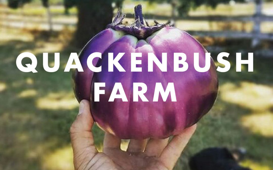 Vendor Spotlight: Quackenbush Farm